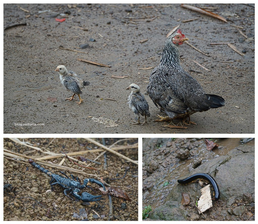 dapet salam dari hewan -hewan yang kami temui sepanjang jalan