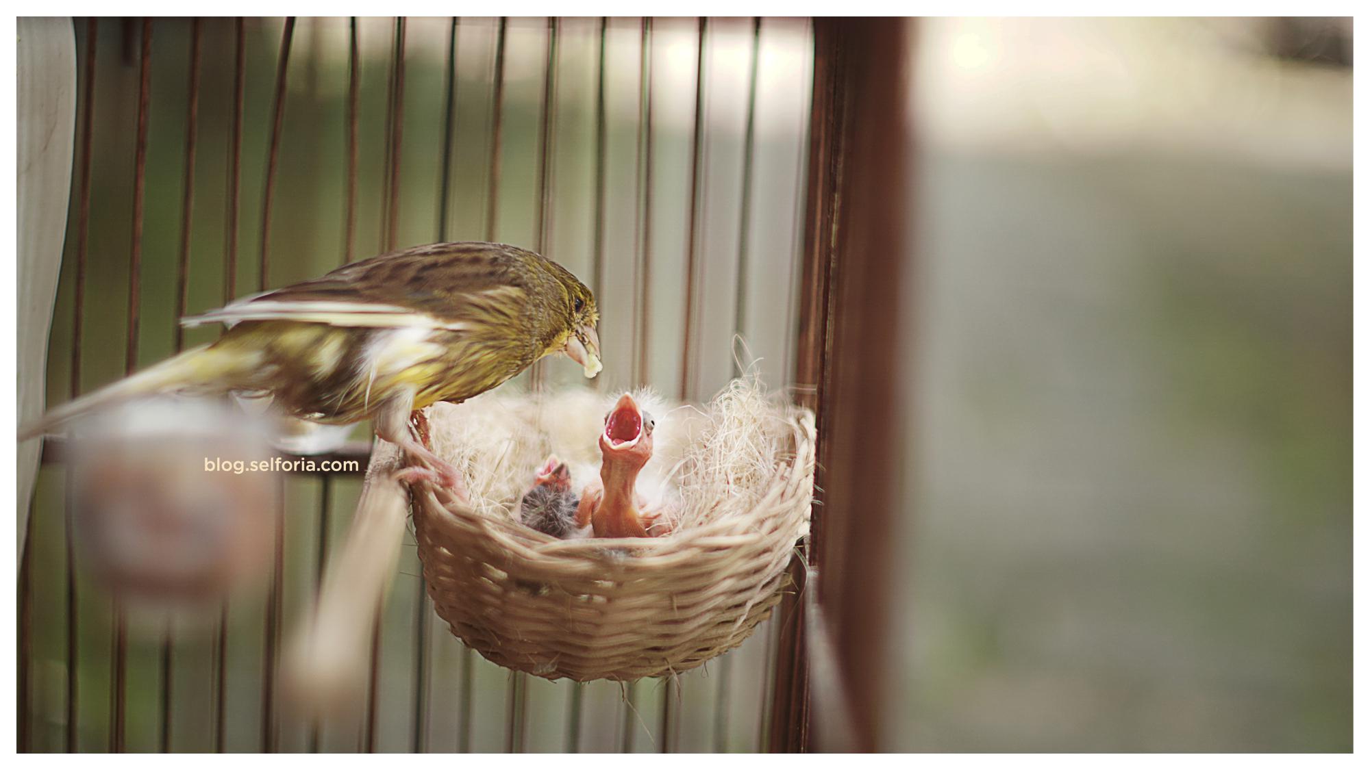 01 bird feeding